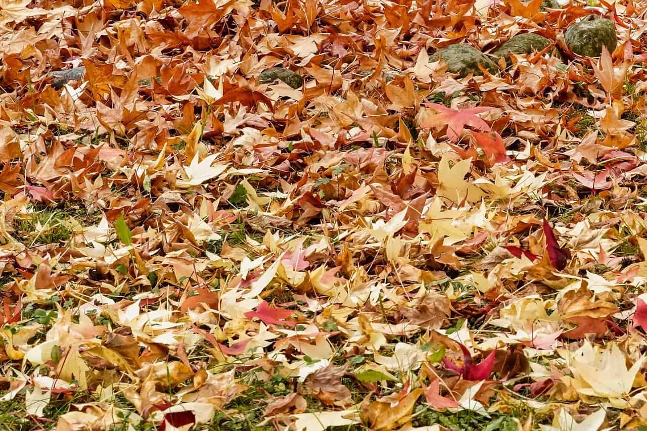 Photograph of brown leaves on the ground